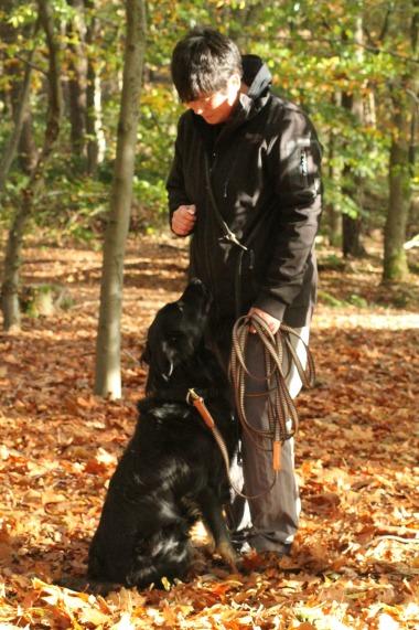 Kommando-Senco-Dogs