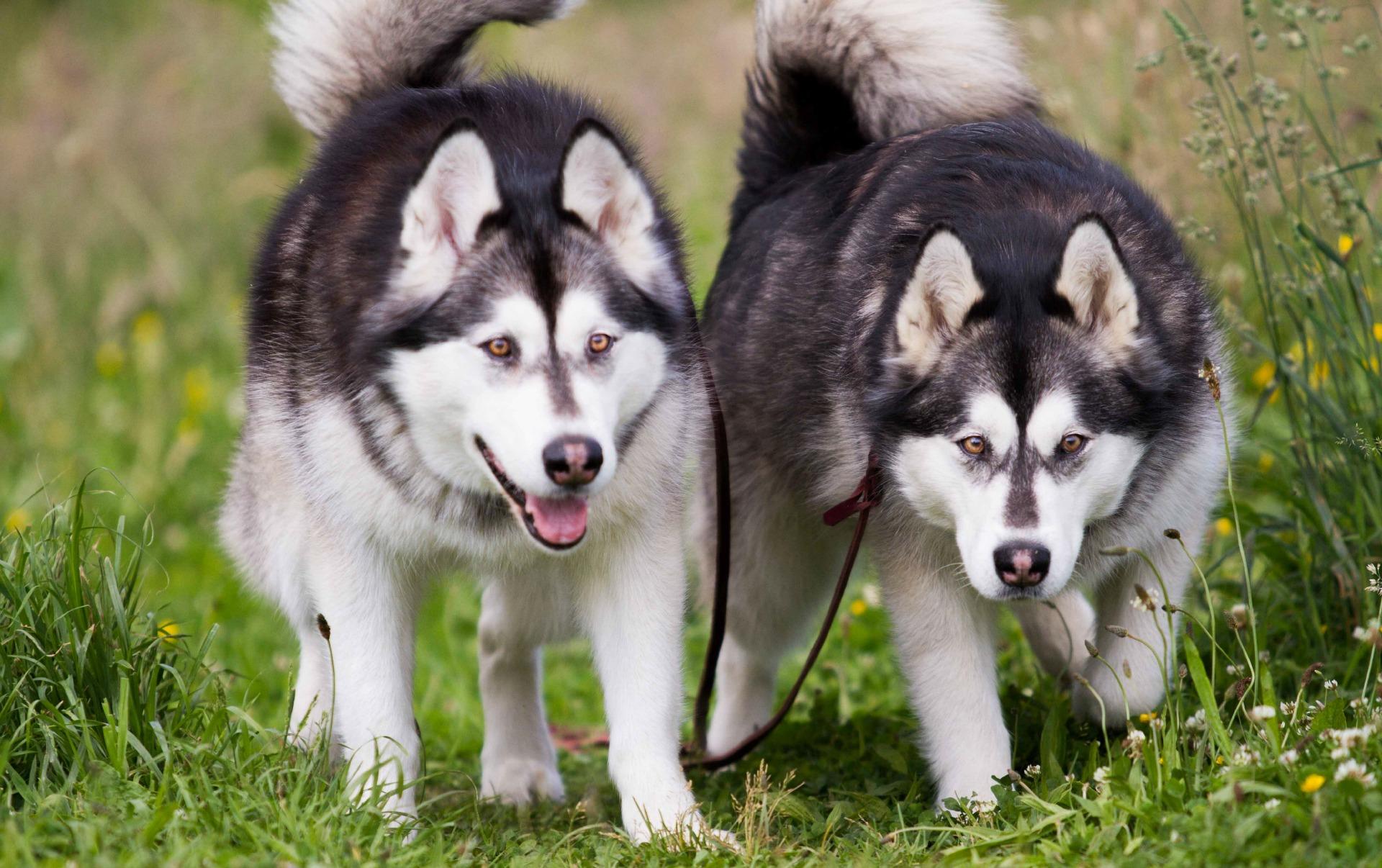 Senco-Dogs-Slider