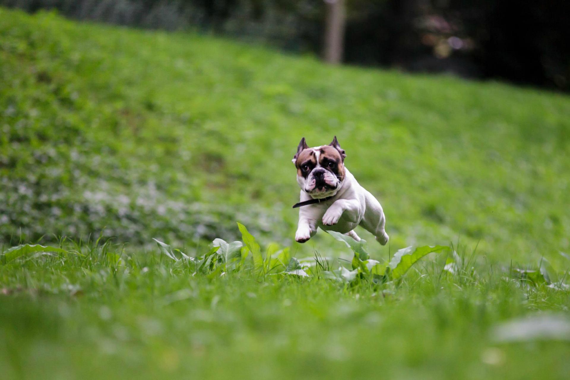 kleiner-Hund-Senco-Dogs