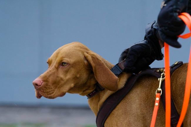 Mantrailing-Senco-Dogs-