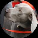 Pyrotechnische-Spürhunde-senci-dogs