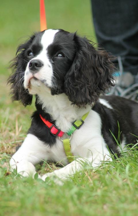 Welpenspielstunde-Senco-Dogs