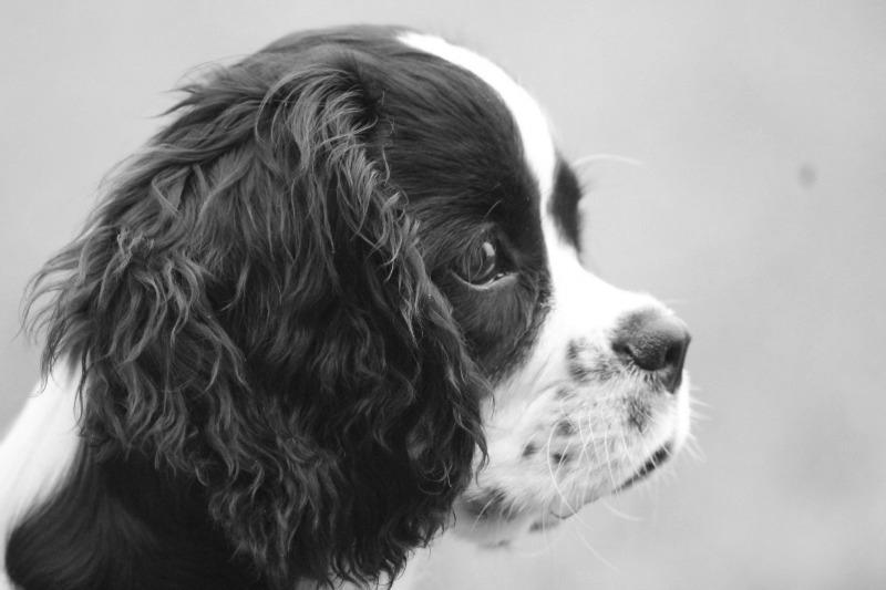 kleiner-Welpe-Senco-Dogs-sw