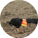 senco-dogs-flächensuchhunde