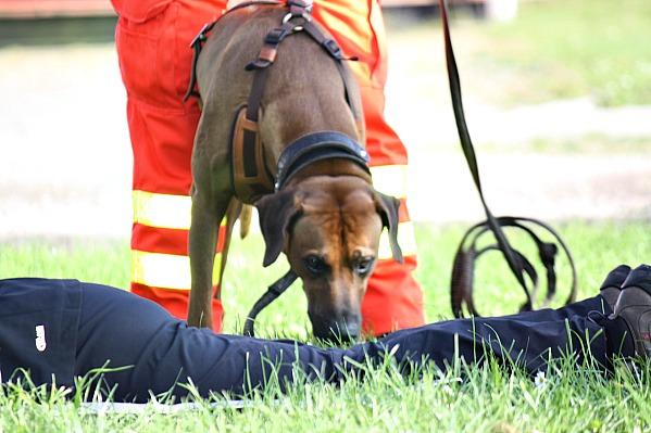 Ausbildung-Rettungshund-Senco-Dogs