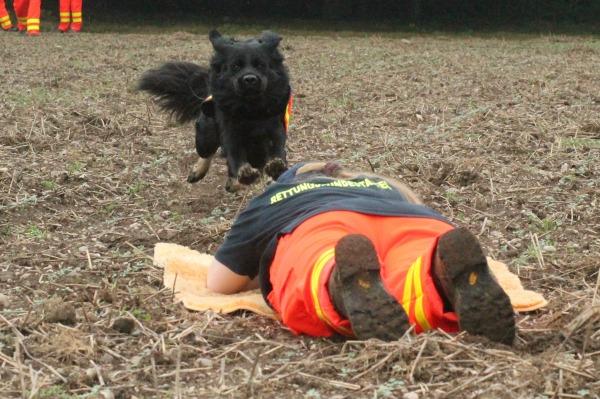 Rettung-sport-senco-dogs