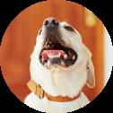Senco-Dogs-Schimmelsuchhund