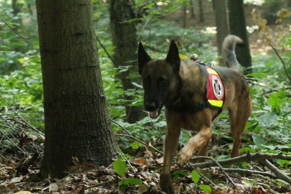 senco-dogs-rettungshunde-ausbildung