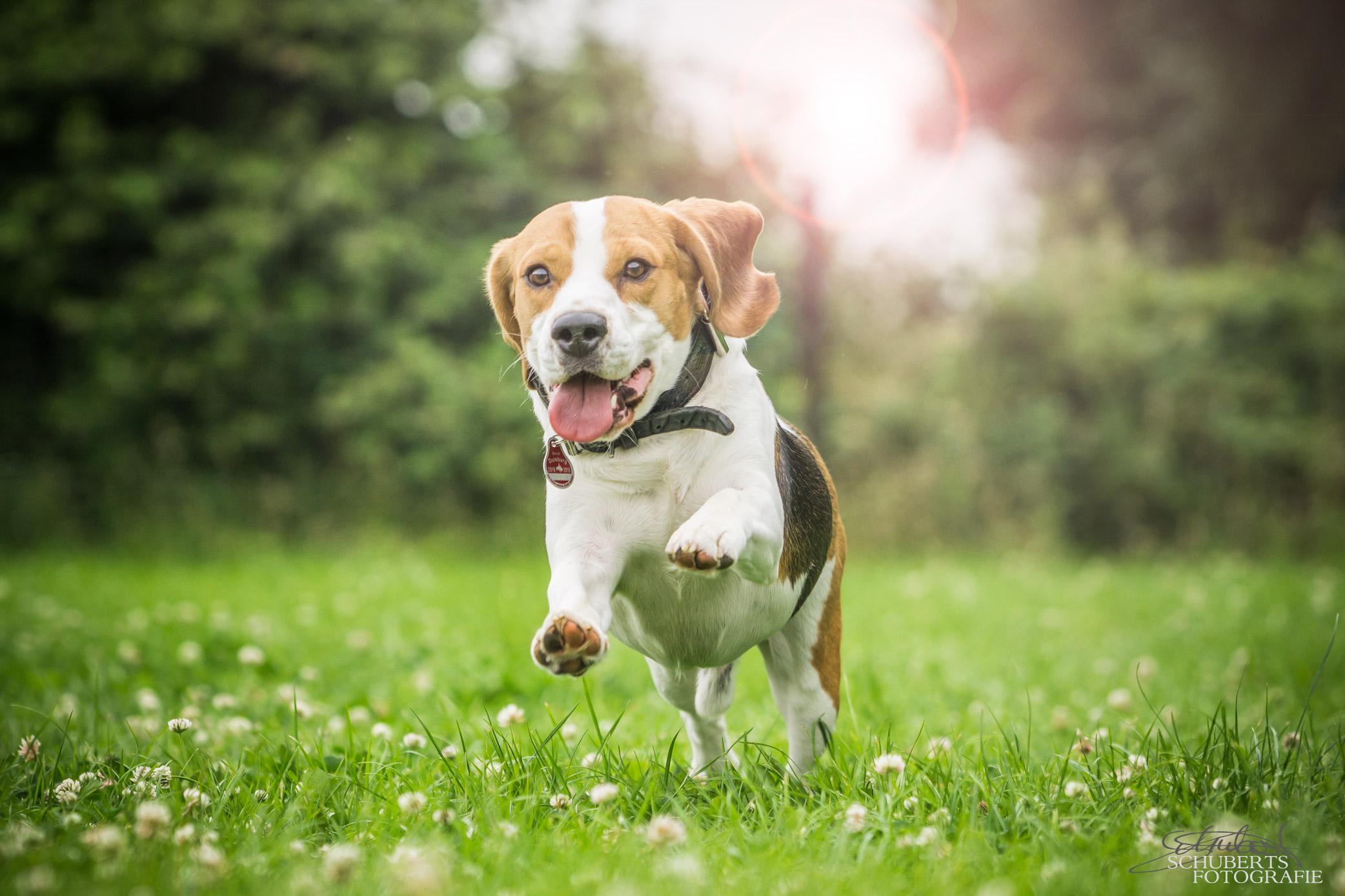 hundeschule-senco-dogs_10