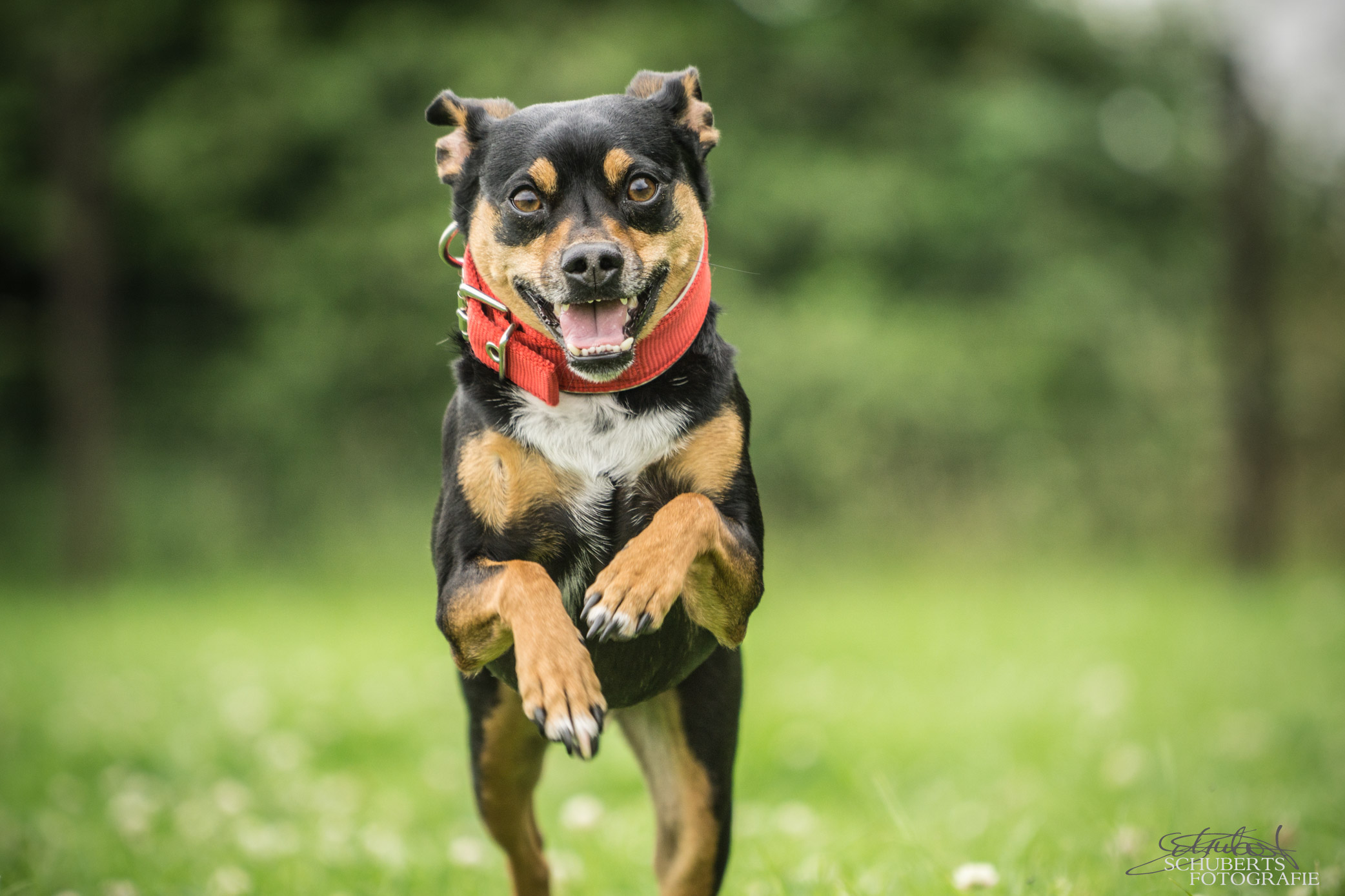 hundeschule-senco-dogs_11