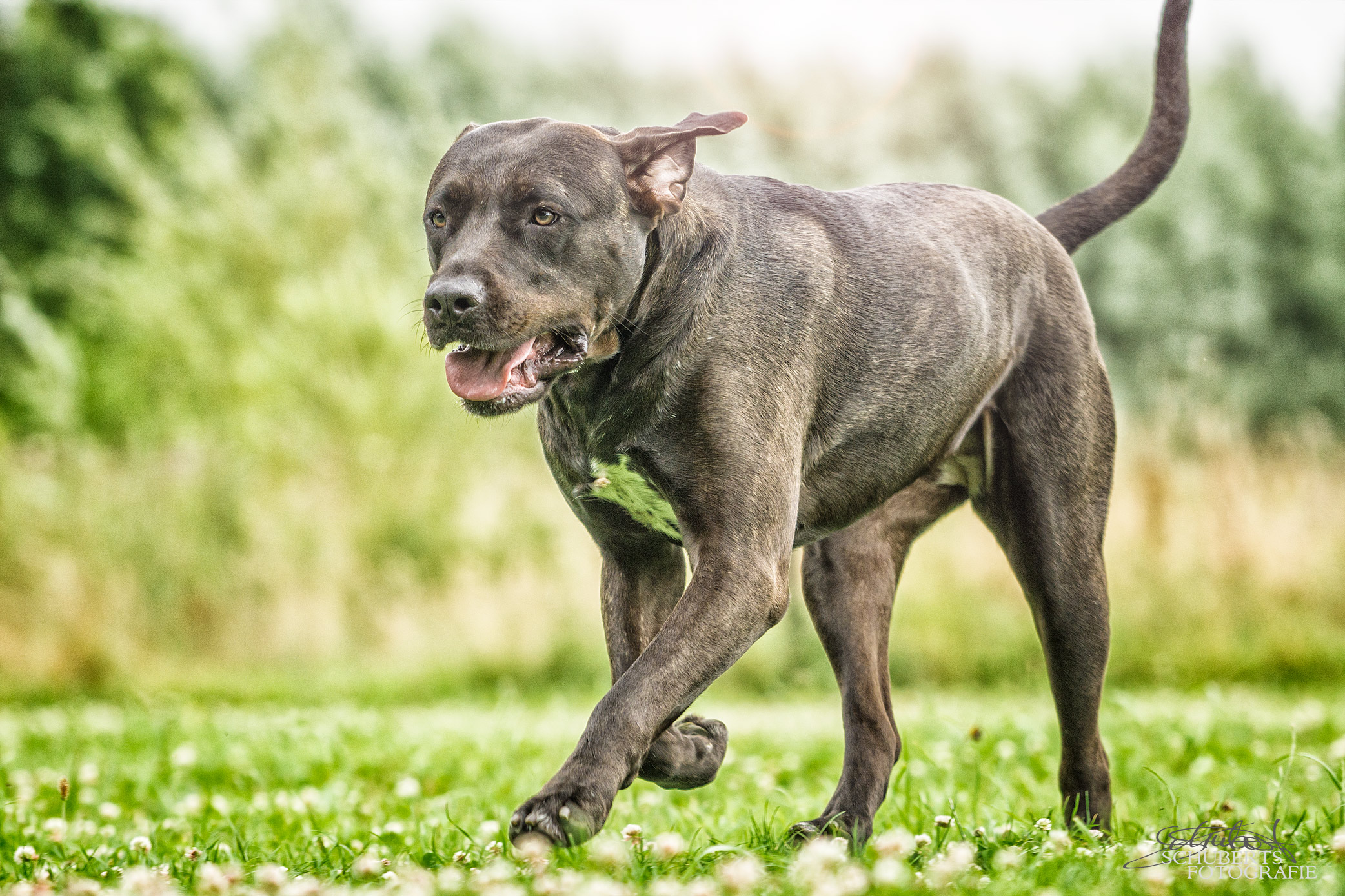 hundeschule-senco-dogs_15