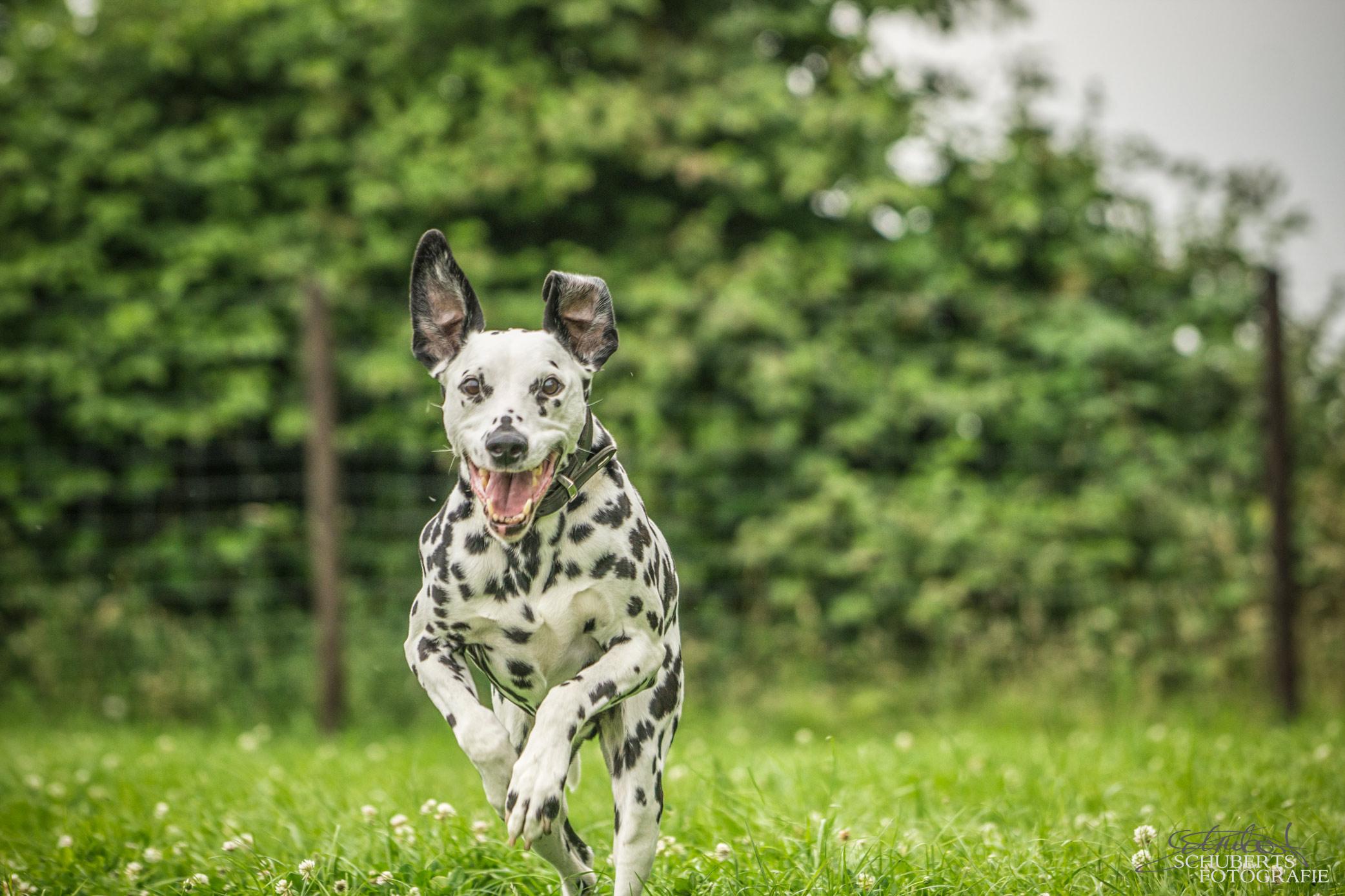 hundeschule-senco-dogs_16