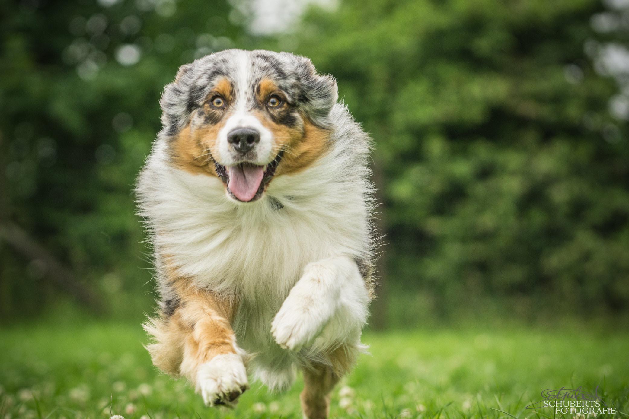 hundeschule-senco-dogs_17