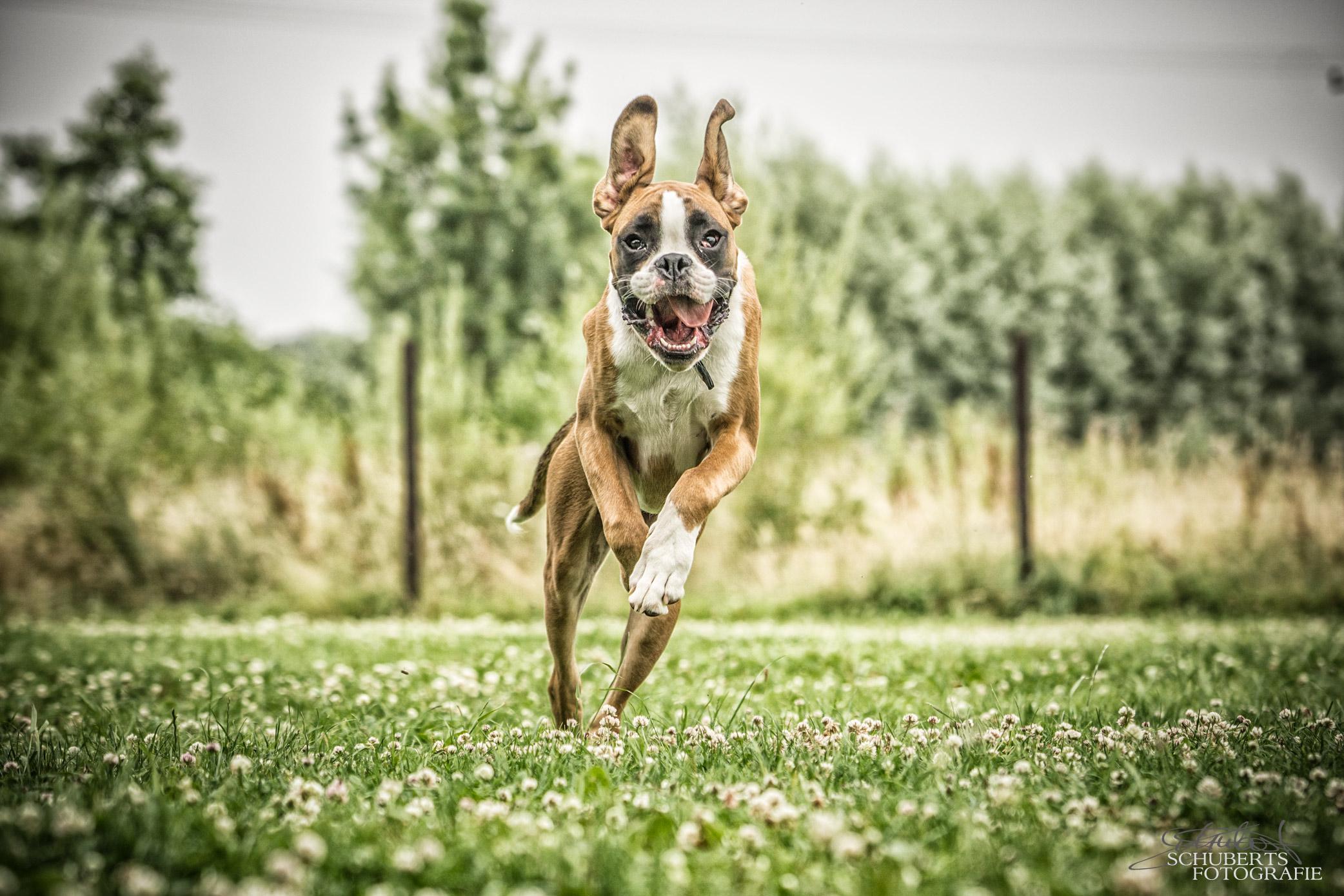 hundeschule-senco-dogs_19