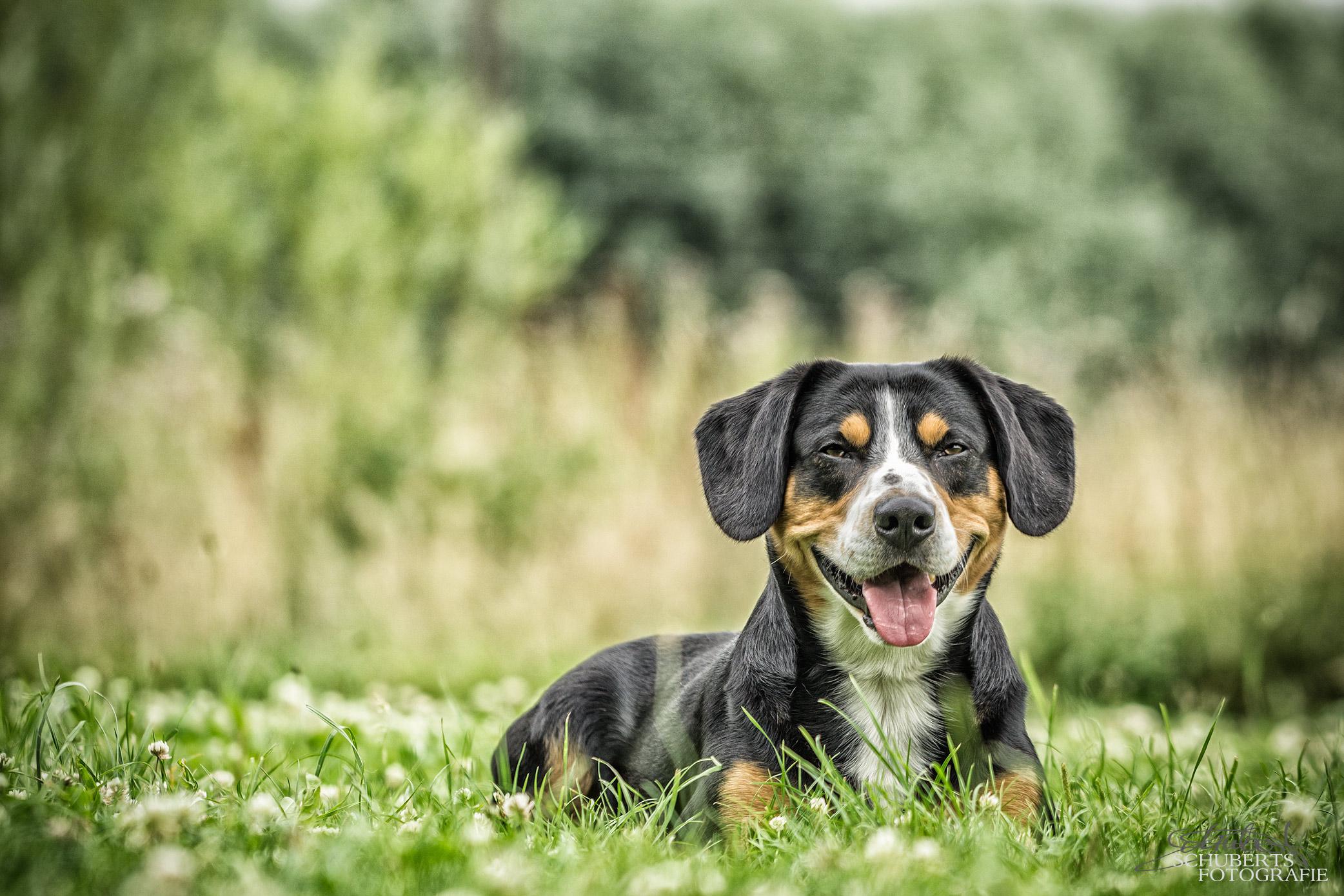 hundeschule-senco-dogs_30