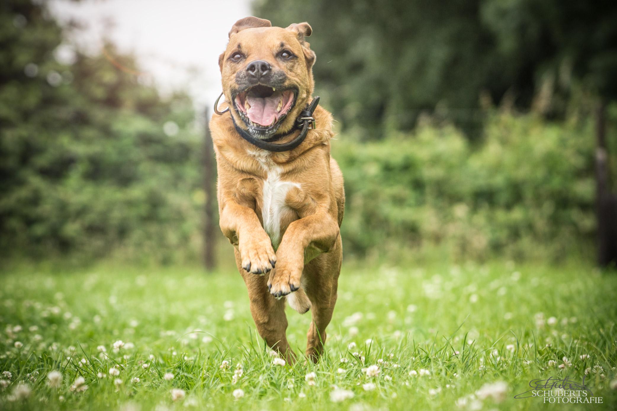 hundeschule-senco-dogs_6