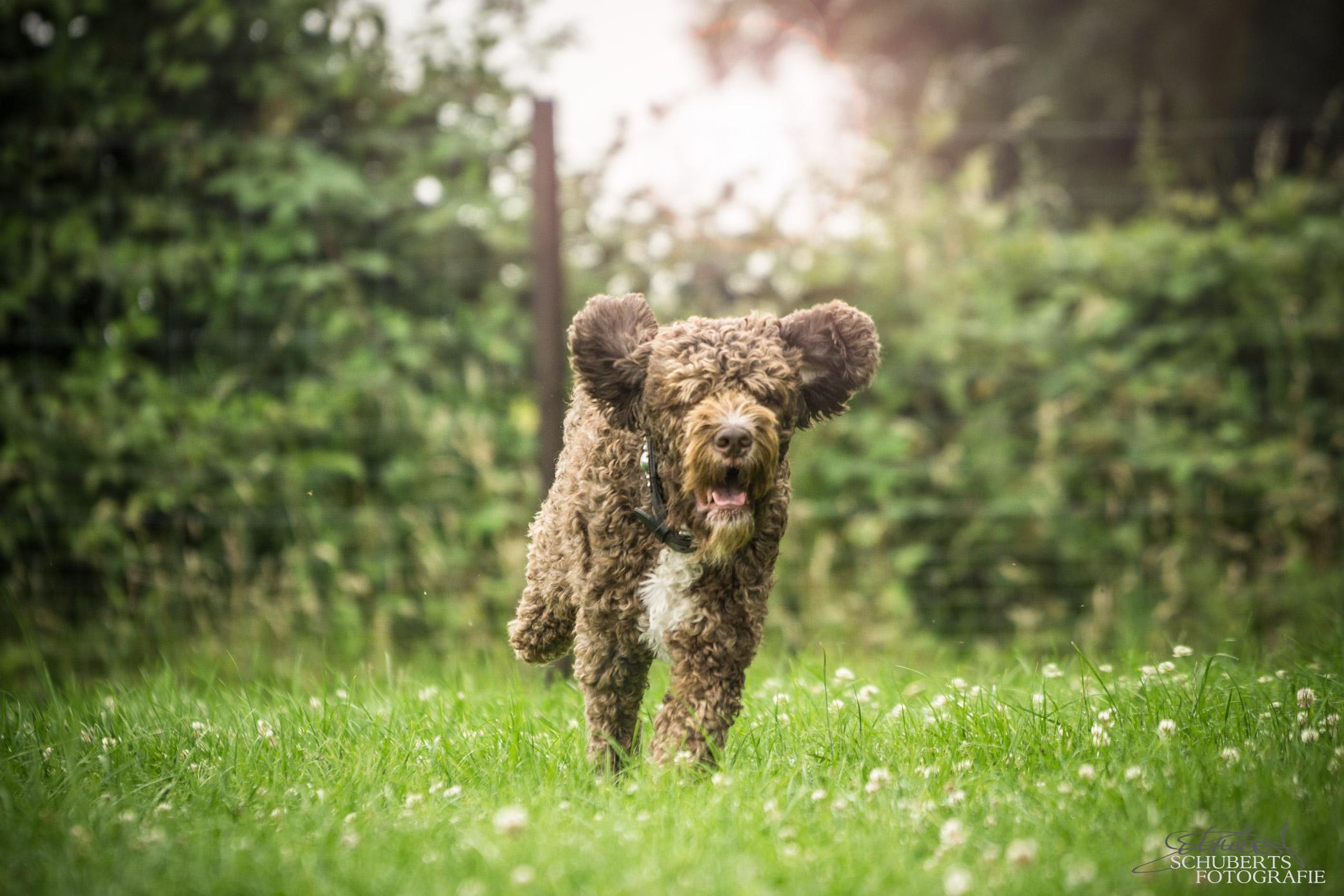 hundeschule-senco-dogs_9