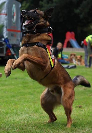 DRV-Hunderettungsstaffel-Ausbildung