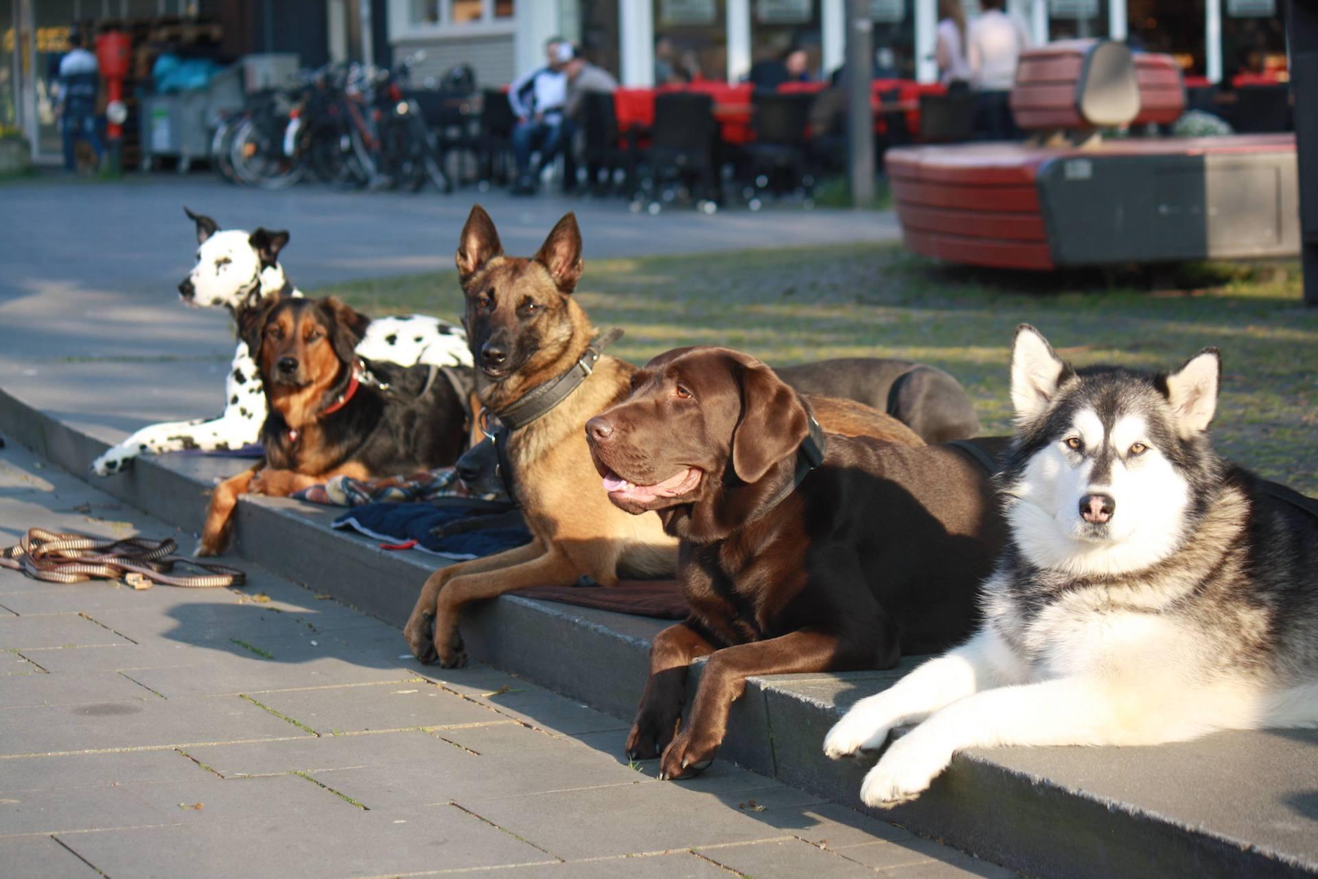 Senco-Dogs.Unser-Team-Ausbildung
