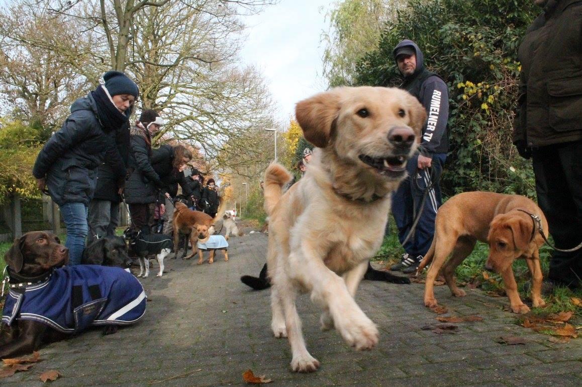 senco-dogs-kamp-lintfort-hunde-schule