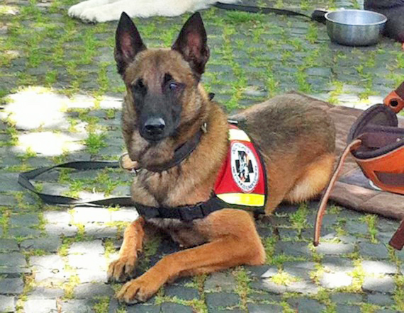 Rettungshund-Senco-Dogs