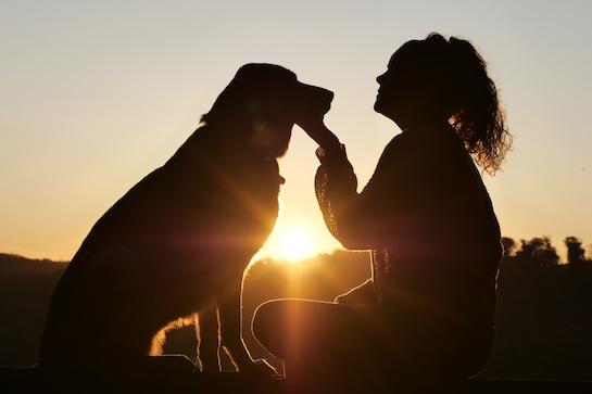 hunde-mensch-beziehung