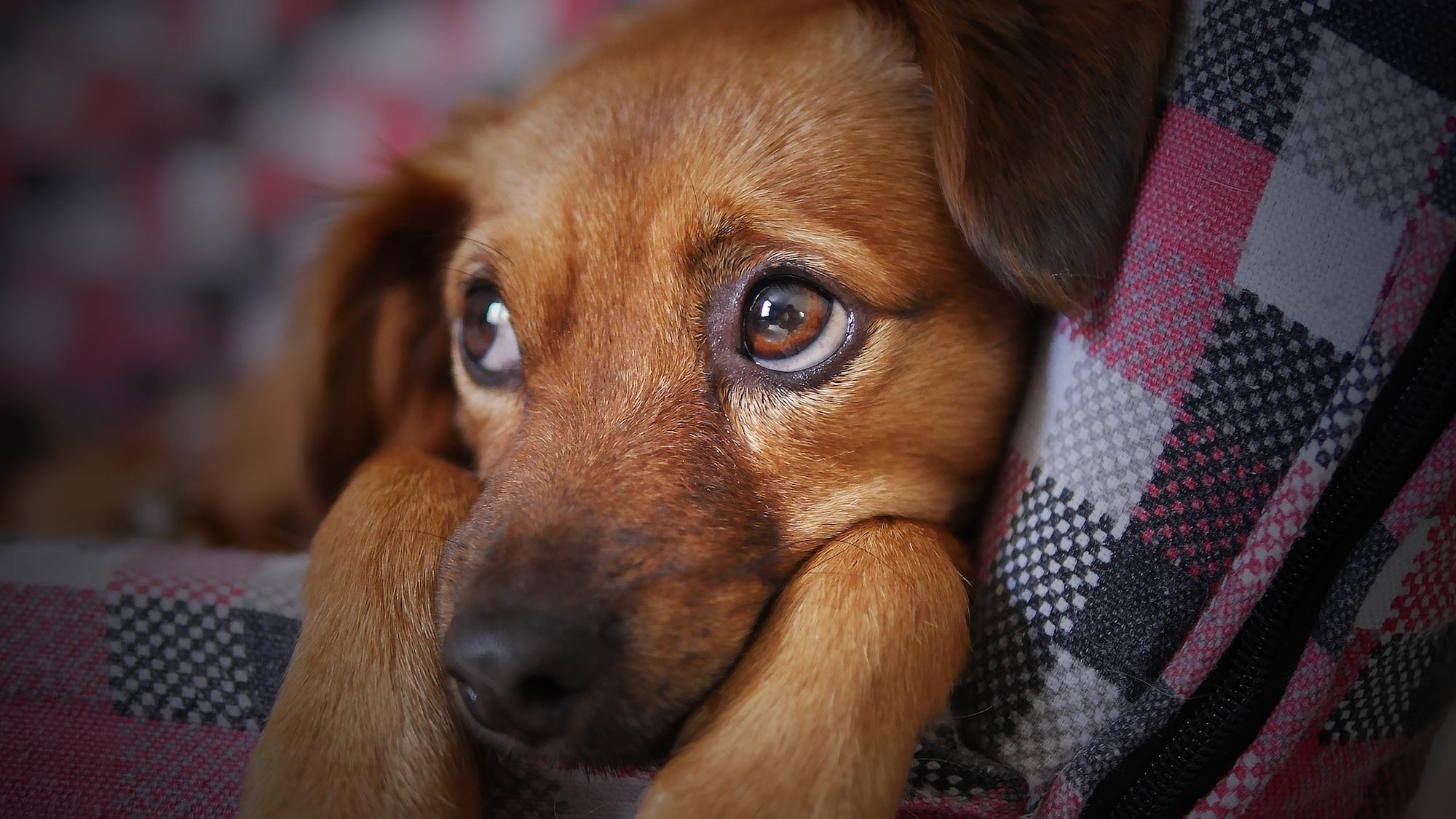 moshebar-senco-dogs-alles-über-vierbeiner